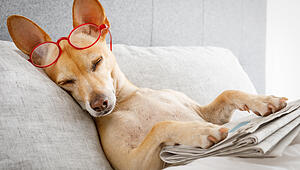 dog in bed with  newspaper