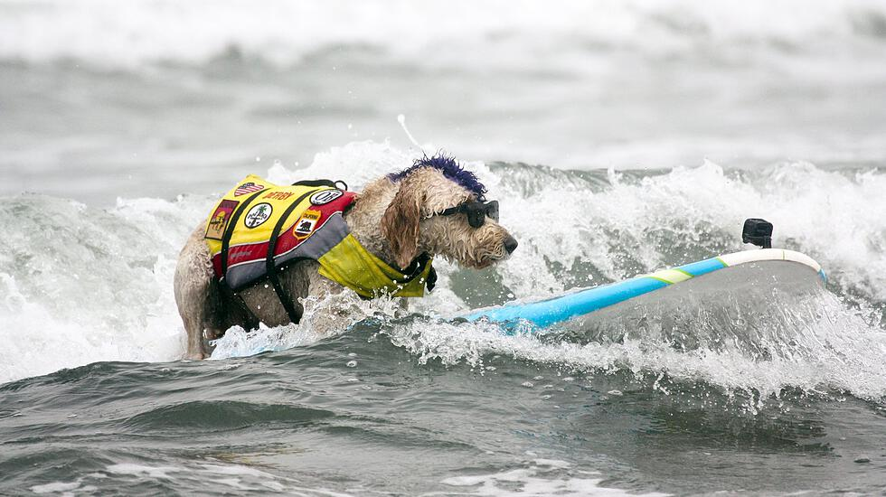 World Dog Surfing Championships
